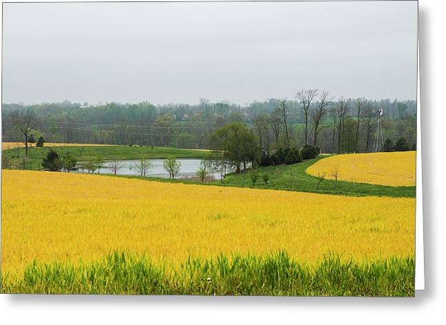 Yellow And Green Greeting Card by Bill Caldwell