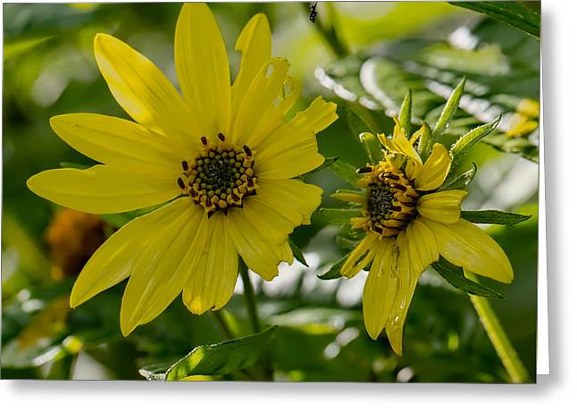 Yellow And Green Tones Greeting Card by Leif Sohlman