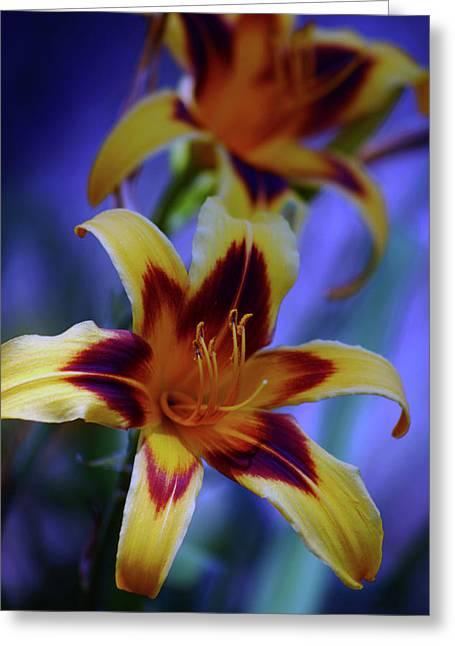 Yellow And Orange And Garnet Daylilies 1270 H_2 Greeting Card