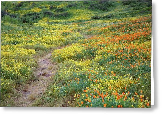 Greeting Card featuring the photograph Yellow And Orange Wildflowers Along Trail Near Diamond Lake by Jetson Nguyen