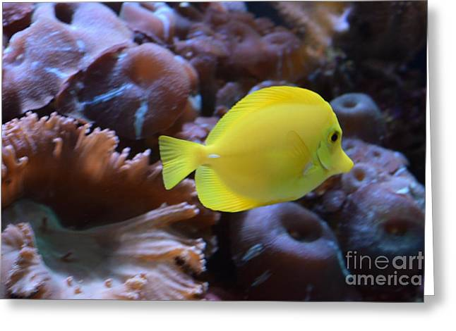 Yellow And Proud  Greeting Card by Jennifer Craft