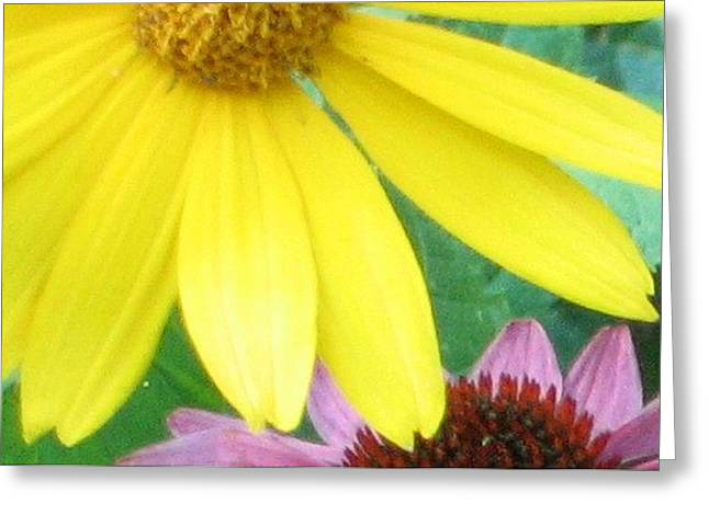 Yellow And Purple Greeting Card by Krista Barth