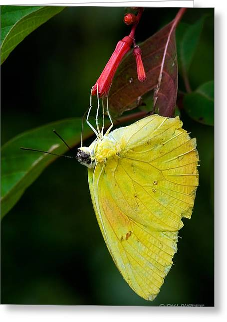Yellow And Red Greeting Card by Don Durfee