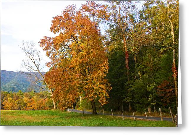 Greeting Card featuring the photograph Yellow And Red Tree by Bob Decker