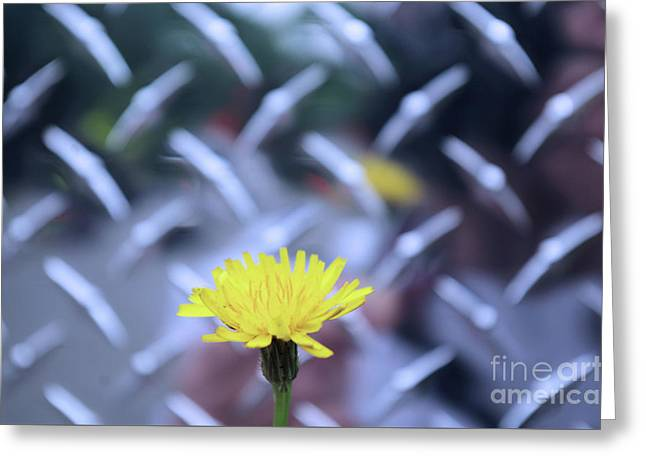 Yellow And Silver Greeting Card