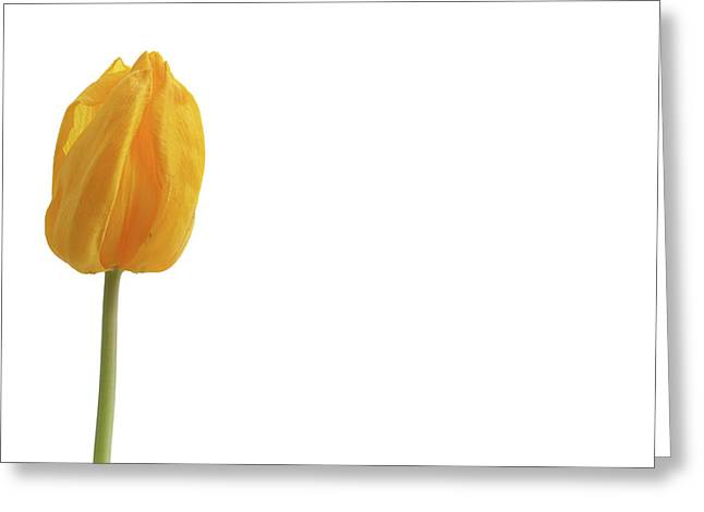 Greeting Card featuring the photograph Yellow And Tulip by Marie Leslie