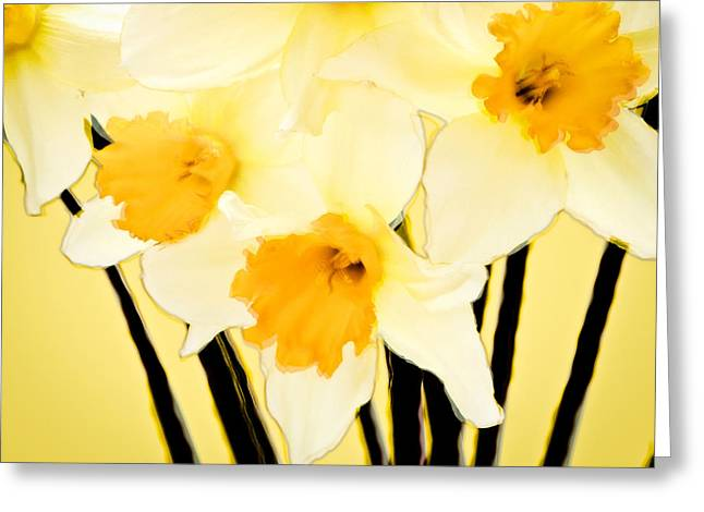 Yellow And White Daffodils. Greeting Card by John Pagliuca