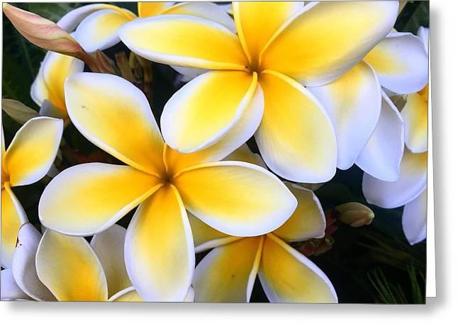 Yellow And White Plumeria Greeting Card