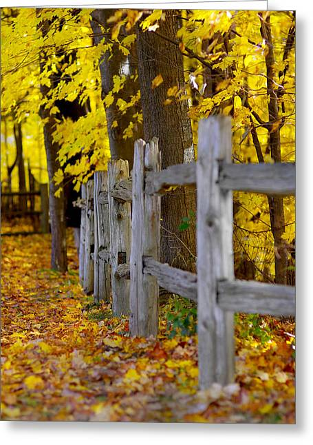Yellow Autumn-0085 Greeting Card by Sean Shaw
