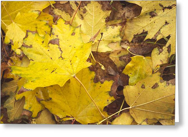 Yellow Autumn Leaves Greeting Card by Thubakabra