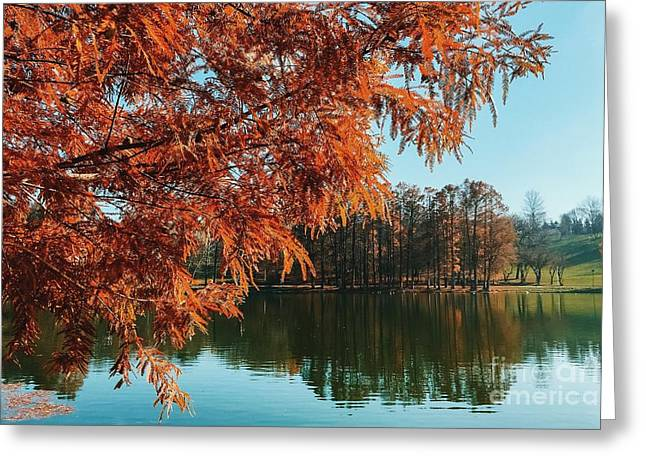 Yellow Autumn Tree On Lake Water With Reflection Background Greeting Card by Radu Bercan