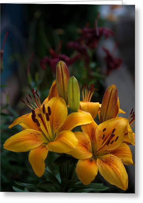 Greeting Card featuring the photograph Yellow Beauties by Cherie Duran