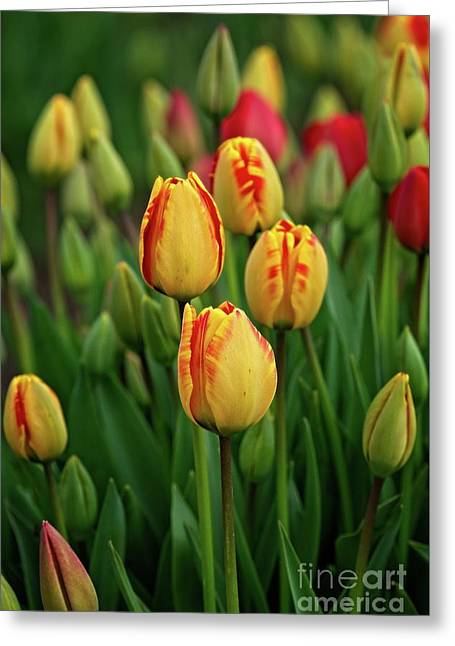 Greeting Card featuring the photograph Yellow Beauties by Craig Leaper