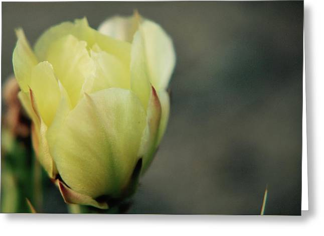 Greeting Card featuring the photograph Yellow Beauty by Amee Cave