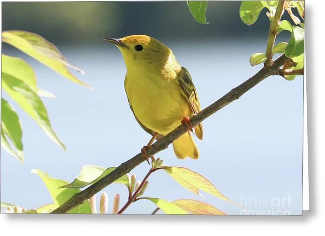 Yellow Beauty Greeting Card