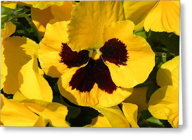 Greeting Card featuring the photograph Yellow Beauty by Fanny Diaz