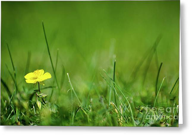 Greeting Card featuring the photograph Yellow Beauty by Kennerth and Birgitta Kullman