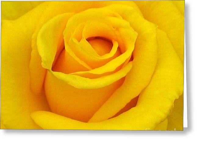 Yellow Beauty Greeting Card by Mg Blackstock