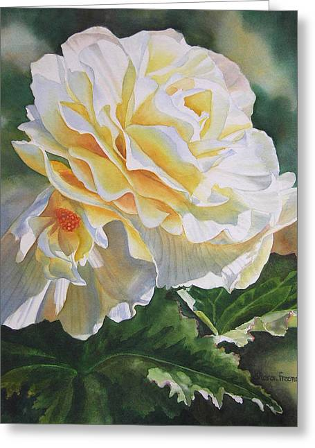 Begonias Greeting Cards - Yellow Begonia with Bud Greeting Card by Sharon Freeman