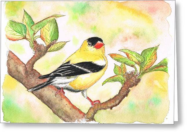 Acuarelas Greeting Cards - Yellow bird American Goldfinch Greeting Card by Carlos G Groppa