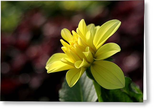 Yellow Bloom Greeting Card by Robert Och