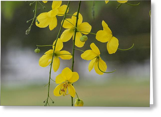 Yellow Blooms Greeting Card by Peter Hanoomansingh