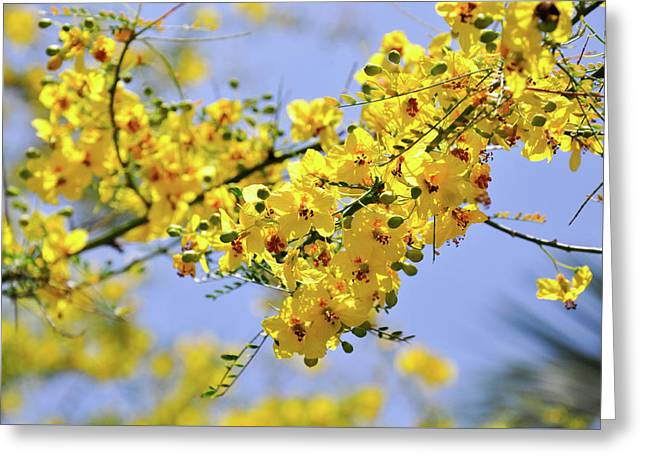 Yellow Blossoms Greeting Card