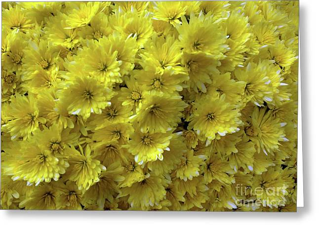 Yellow Bouquet Greeting Card by Jasna Dragun