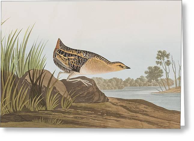 Yellow-breasted Rail Greeting Card by John James Audubon