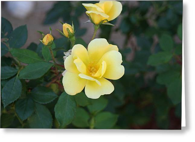 Yellow Greeting Card by Bret Worrell