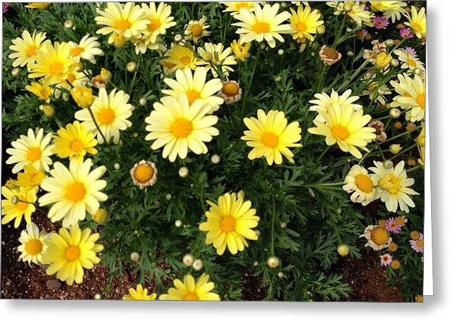 Yellow Buds Greeting Card by Alohi Fujimoto