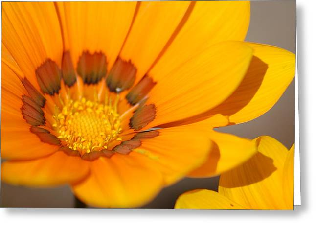 Yellow Burst Greeting Card