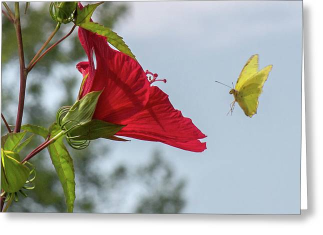 Yellow Butterfly Art Greeting Card
