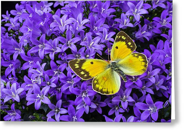 Yellow Butterfly On Mee Greeting Card by Garry Gay