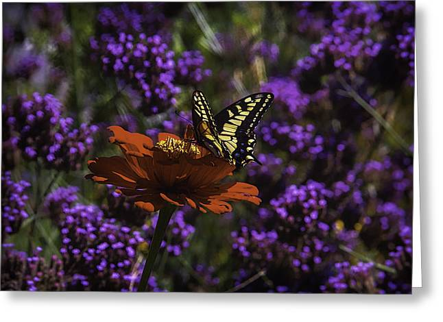 Yellow Butterfly On Red Petals Greeting Card by Garry Gay