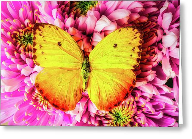 Yellow Butterfly On Spider Mums Greeting Card