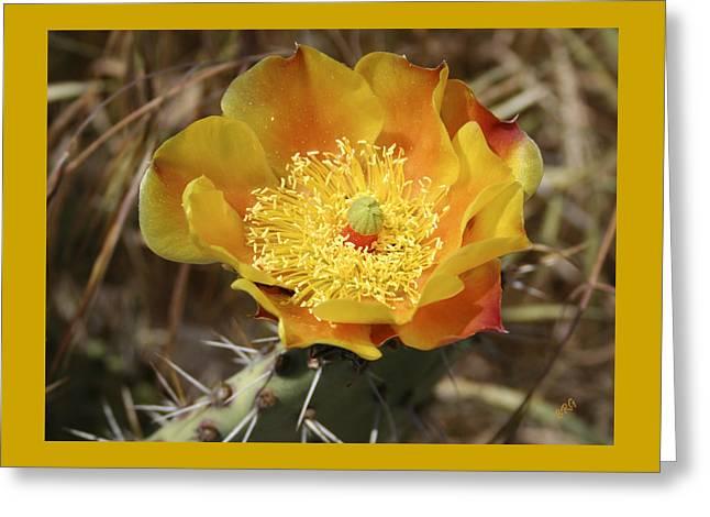 Yellow Cactus Flower On Display Greeting Card