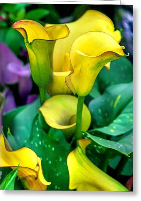 Yellow Calla Lilies Greeting Card by Az Jackson