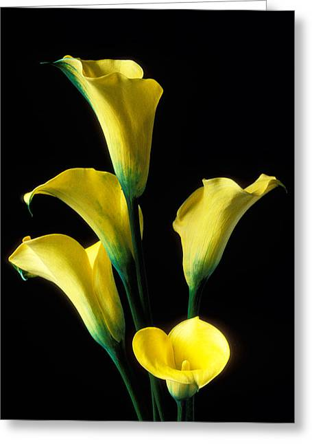 Calla Greeting Cards - Yellow calla lilies  Greeting Card by Garry Gay