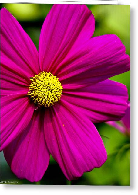 Yellow Center Greeting Card by Ches Black