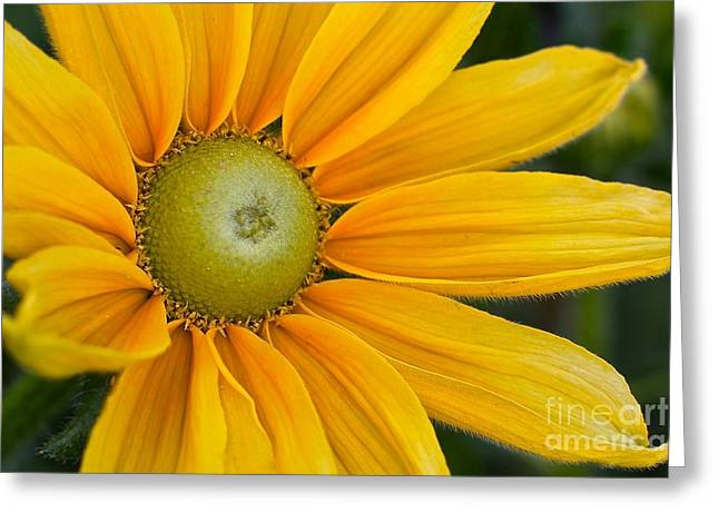 Yellow Colorado Beauty Greeting Card