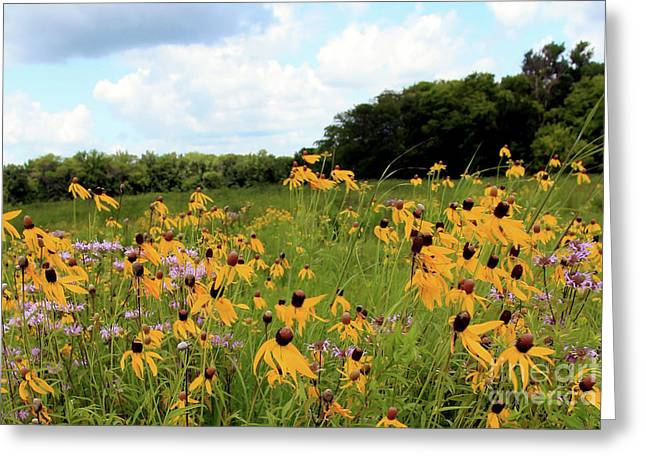 Yellow Cone Flowers Greeting Card