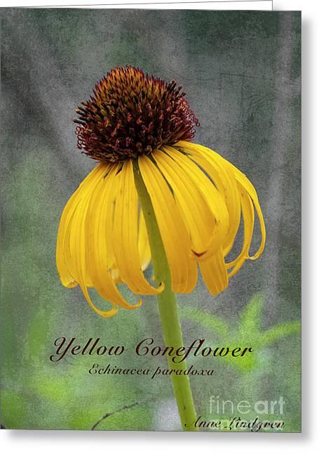 Yellow Coneflower Greeting Card