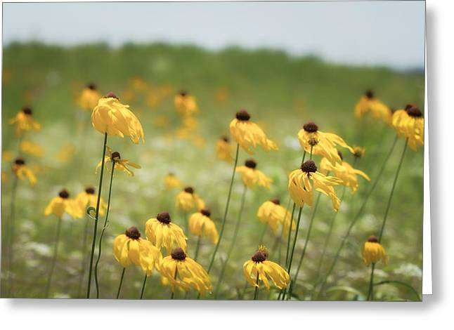 Yellow Coneflower Greeting Card by James Barber