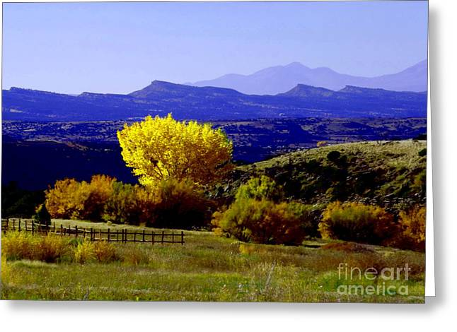Yellow Cotton Wood Red Vale Colorado Greeting Card by Annie Gibbons