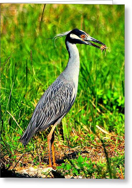 Yellow Crested Night Heron Catches A Fiddler Crab Greeting Card by Barbara Bowen