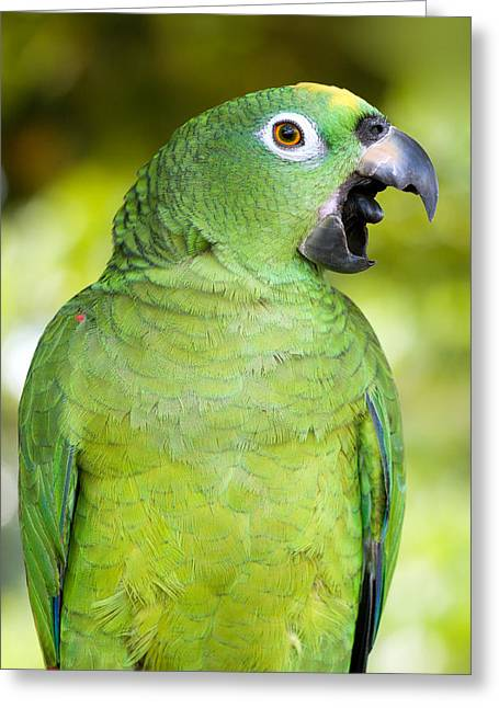 Yellow-crowned Amazon Parrot Greeting Card by Aivar Mikko