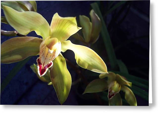 Yellow Cymbidium And Shadows Greeting Card by Jean Booth