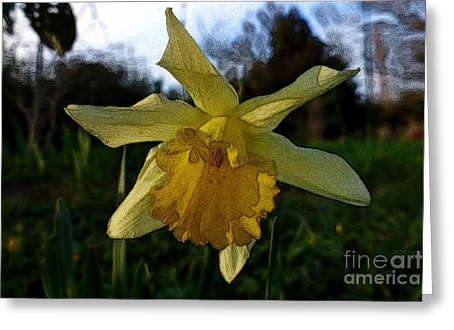 Yellow Daffodils 5 Greeting Card by Jean Bernard Roussilhe