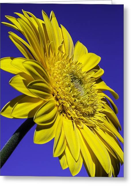Yellow Daisy Against The Sky Greeting Card